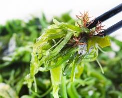 Grossiste algues Franche-Comté
